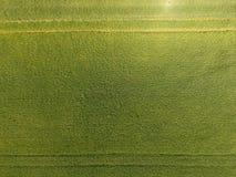 Grano verde nel campo, vista superiore con un fuco Struttura del fondo di verde del grano immagini stock