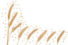 Grano y oídos del trigo aislados en el fondo blanco con el espacio de la copia para su texto Visión superior Modelo plano de la e Imagen de archivo
