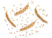 Grano y oídos del trigo aislados en el fondo blanco Visión superior Imagenes de archivo