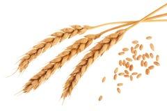 Grano y oídos del trigo aislados en el fondo blanco Visión superior Fotografía de archivo libre de regalías