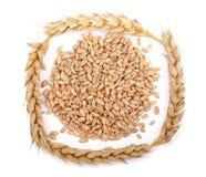 Grano y oídos del trigo aislados en el fondo blanco Visión superior Imagen de archivo