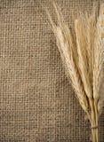 Grano y saco del trigo como fondo Imagenes de archivo