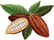 Granos de cacao Fotografía de archivo