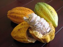 Granos de cacao Imagenes de archivo