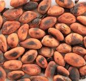 Granos de cacao asados Fotos de archivo