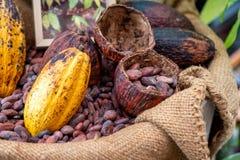 Granos de cacao con la vaina del cacao fotos de archivo libres de regalías