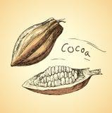 Granos de cacao dibujados mano Habas del cocao del chocolate Foto de archivo