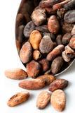 Granos de cacao en la cucharada aislada en blanco Imagenes de archivo