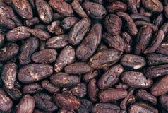 Granos de cacao - fondo Imagen de archivo libre de regalías