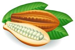 Granos de cacao. Ilustración del vector. Imagenes de archivo