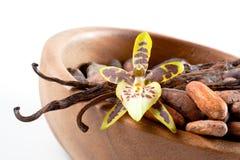 Granos de cacao y flor de la vainilla Fotografía de archivo