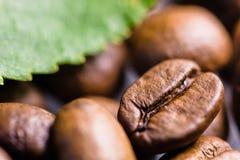 Granos de café asados con cierre verde de la macro de la hoja para arriba Fotos de archivo libres de regalías