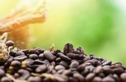 Granos de café asados en la macro del primer del saco de los granos de café en fondo de madera y verde de la luz del sol de la  foto de archivo