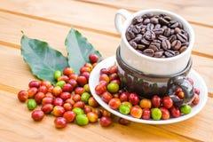 Granos de café asados y granos de café maduros rojos Foto de archivo libre de regalías