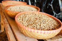Granos de café de Kopi Luwak Imágenes de archivo libres de regalías