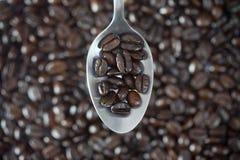 Granos de café en cuchara Foto de archivo libre de regalías