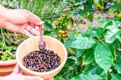 Granos de café en cuenco de madera Imagen de archivo