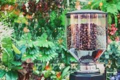 Granos de café en el cierre de cristal de la máquina de la amoladora para arriba fotos de archivo