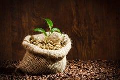 Granos de café en el saco de la arpillera con la cucharada del metal Fotografía de archivo libre de regalías