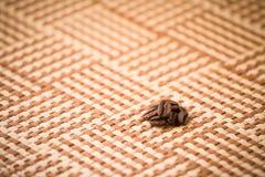 Granos de café en mantel Fotografía de archivo