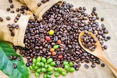 Granos de café en saco Imagenes de archivo