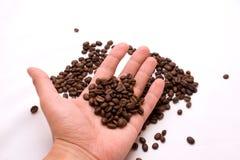 Granos de café en una palma Fotos de archivo