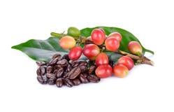 Granos de café frescos con el tronco y el st asado del arabica de los granos de café Fotografía de archivo libre de regalías