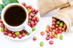 Granos de café maduros rojos Imagen de archivo