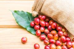 Granos de café maduros rojos Imagen de archivo libre de regalías