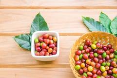 Granos de café maduros rojos con la hoja verde Fotos de archivo libres de regalías