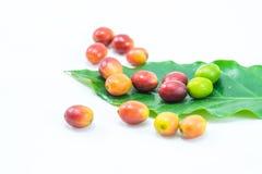 Granos de café maduros rojos con la hoja verde Foto de archivo