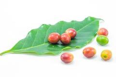 Granos de café maduros rojos con la hoja verde Imagen de archivo libre de regalías