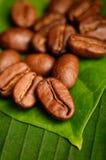 Granos de café orgánicos del comercio justo Foto de archivo libre de regalías