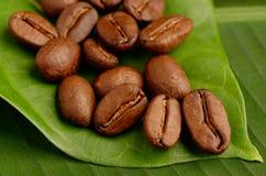 Granos de café orgánicos en una hoja Fotos de archivo libres de regalías