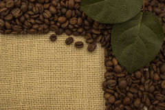 Granos de café que mienten en el despido imagen de archivo