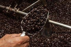 Granos de café recientemente asados en un tostador de café Fotos de archivo libres de regalías