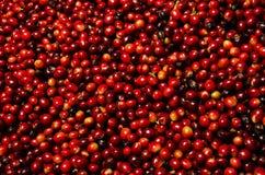Granos de café rojos Imagen de archivo libre de regalías