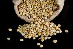Granos de café secos Fotos de archivo libres de regalías