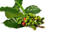 Granos de café verdes imagen de archivo libre de regalías