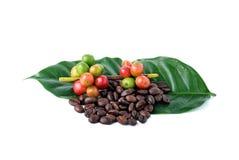 Granos de café y café maduro Fotografía de archivo
