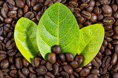 Granos de café y hojas Fotos de archivo libres de regalías