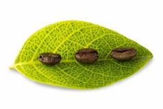 Granos de café y hojas Fotografía de archivo libre de regalías