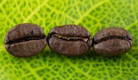 Granos de café y hojas Foto de archivo