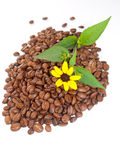 Granos de café y manzanilla amarilla. Foto de archivo