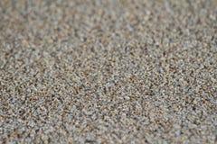 Granos de la arena Foto de archivo libre de regalías