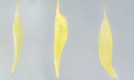 Granos de la fruta Imagen de archivo libre de regalías