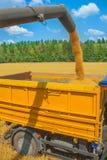 Granos de Loadding del trigo en la cosecha Fotos de archivo