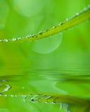 Granos del agua en la lámina de la hierba imagenes de archivo