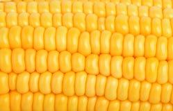 Granos del amarillo de la textura del maíz como fondo Fotografía de archivo libre de regalías