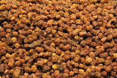 Granos del Beebread Fotografía de archivo libre de regalías